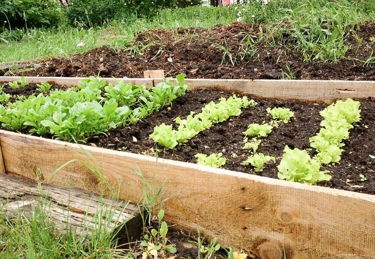 raise garden