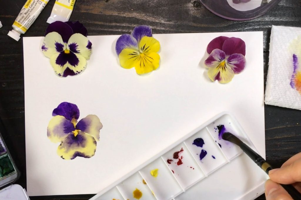 How to Paint Pansies in Watercolour